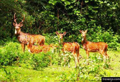 Shillong Kaziranga Tour by Travenjo