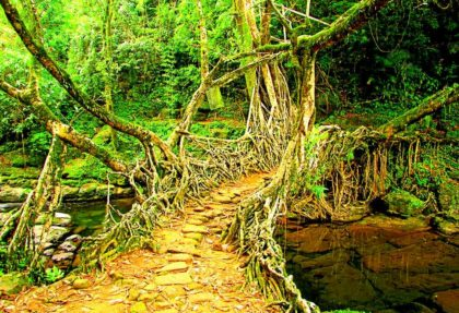 Living Root Bridge - Mawlynnong