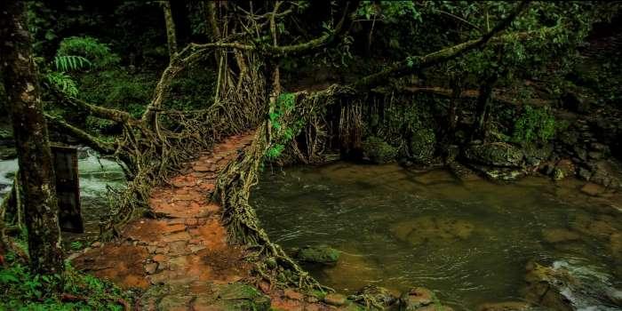 Mawlynnong Living Root Bridge.