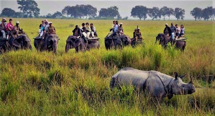 4 Days 3 Nights Kaziranga National Park Wildlife Tour Package